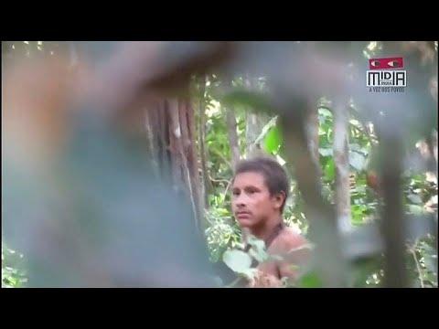 Amazonas: Indigener Awa Stamm durch Rodung bedroht