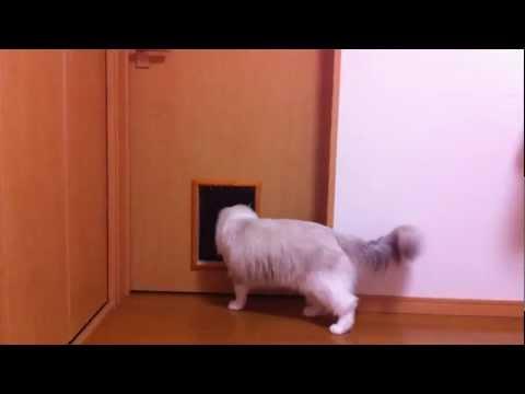 貼心貓奴為主子裝上貓門方便出入,沒想到主子竟然使用這招...
