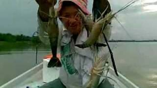Bagan Datoh Malaysia  city photos : Prawn fishing. sungai dulang, bagan datok, perak, malaysia