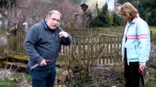 #316 Schneiden im Garten 2011 Familie Boeni 1v5 - Schnitt einer Strauchrose 1v2