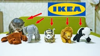 【IKEAのぬいぐるみ】カワウソビンゴの推しメンは誰!?(Proved! This is Otter Bingo's favorite stuff toy from Ikea!)
