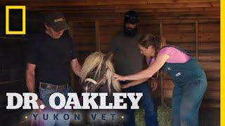 Runaway the Mini-Horse | Dr. Oakley, Yukon Vet by Nat Geo WILD