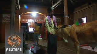 Cambodia's latest social media sensation is a five-month-old calf believed by a villager to be the reincarnation of her dead husband. Rough Cut - no reporter...