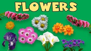 Flower Names For Kids With PicturesLearn the common flower names with this simple and straight forward video for kids and children!