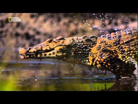 National Geographic HD: Природная инженерия. Выживание в джунглях (видео)