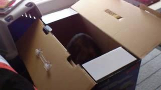 Notre petit Chaton s'attaque a un carton