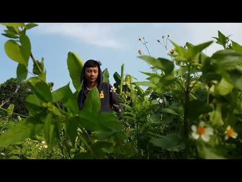 Download Video Astrid - Hanya Untukmu (Music Video,Forest In Motion ) #JagaHutan