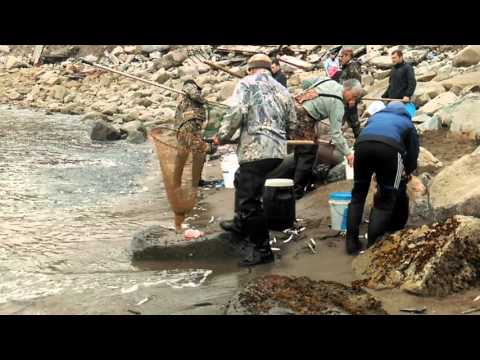 рыбалка на охотском море видео бесплатно