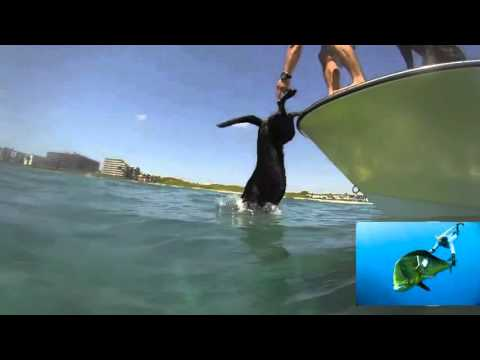 Chcete vidět, co psi aportují z vody? Podívejte se na video!