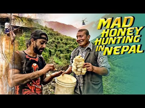 (Mad Honey Hunting in Nepal (भीर मौरिको मह) - Duration: 18 minutes.)