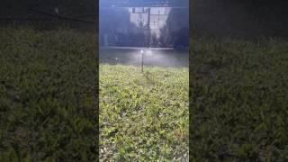 Microaspersor de corta distancia Marca POELSAN