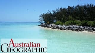Heron Island Australia  city photos gallery : Heron Island: Hidden gem of the Great Barrier Reef