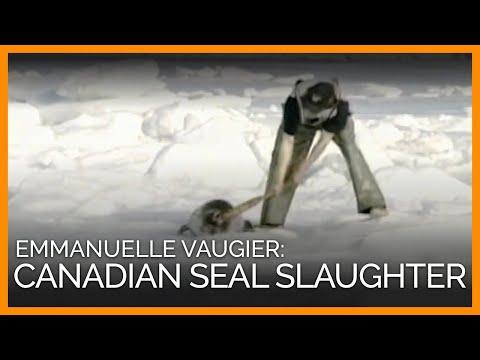 Canadian Seal Slaughter (PETA Ad)