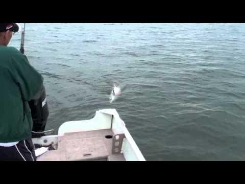 Capture d'un esturgeon de 55 livres dans le Fleuve Saint-Laurent