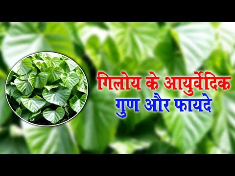 Ayurvedic properties and benefits of Giloy