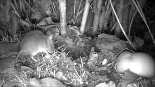 Wildlife Trail Camera - 12.12.2016