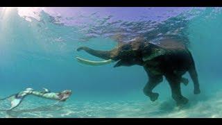 The Journey of Mermaid Melissa The Real Life Mermaid Update