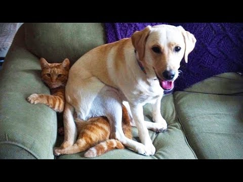 CAT vs DOG Who win? Funny reactions make you laugh  Funny Animals Compilation