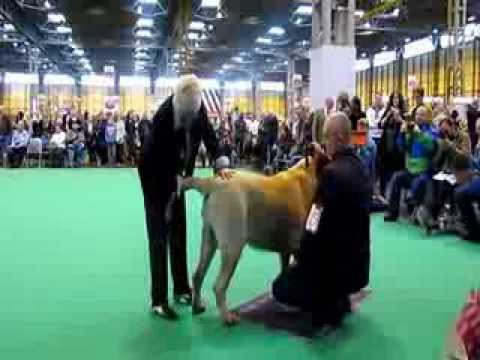 Cruft United Kingdom Birmingham Dog Show 06.03.2014