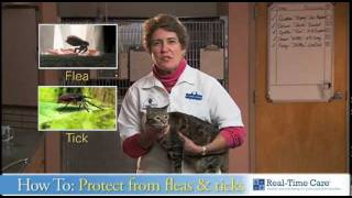 Protecting Your Cat from Fleas and Ticks.mov