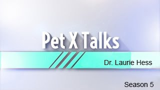 Pet X Talks - Dr. Laurie Hess - The right exotic pet for you, your lifestyle and your pet full download video download mp3 download music download