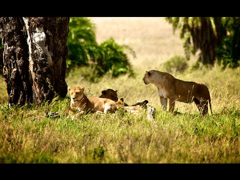 Safari in Tanzania & beach holiday on Zanzibar