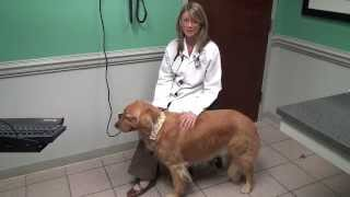 Pet Obesity With Dr. Virginia Kiefer - Animal Medical Hospital, Charlotte