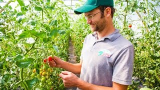 Bayberry Fresh is a local farm near Fort Collins, Colorado. Haydn Christensen, owner and operator of Bayberry Fresh, grows and sells cherry tomatoes to his ...