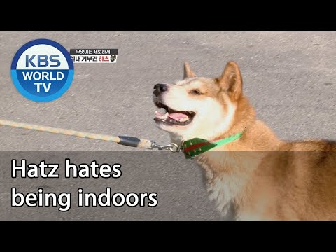Hatz hates being indoors [Dogs are incredible/ENG/2020.10.14]