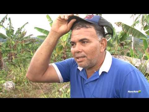 Produção de banana em Tarauacá