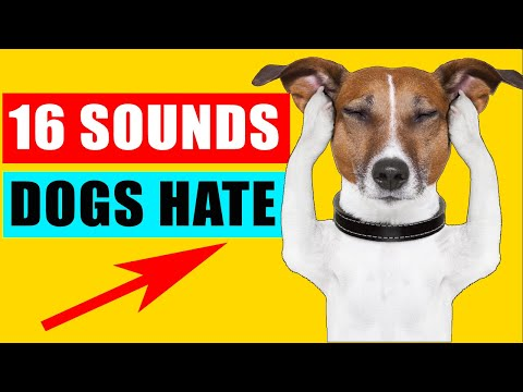 16 Sounds Dogs Hate