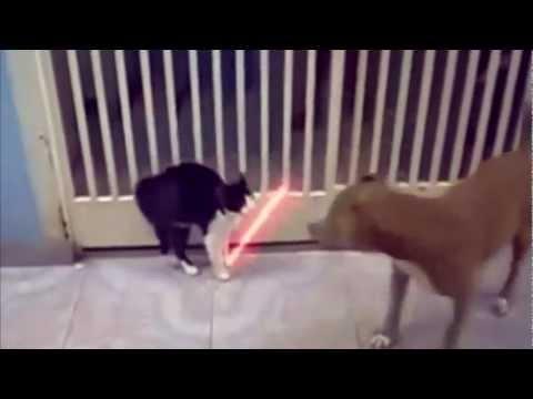 cats   vicces macskák