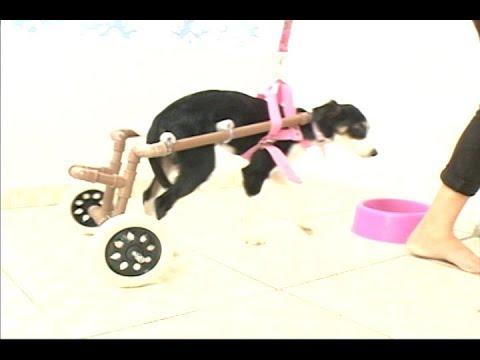 [JORNAL DA TRIBUNA] Autônoma precisa de ajuda para continuar fabricando cadeiras de rodas para cães