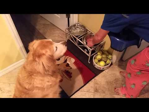 does your dog eat breakfast this way?