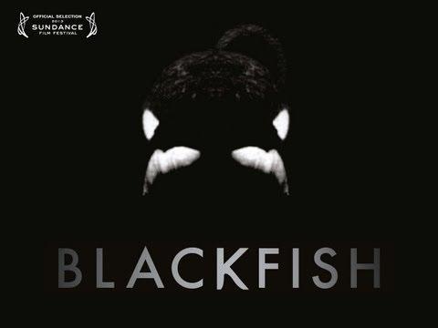 Blackfish Clip 1