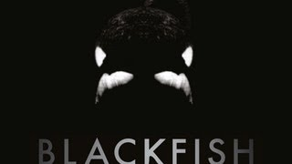 Nonton Blackfish Clip 1 Film Subtitle Indonesia Streaming Movie Download