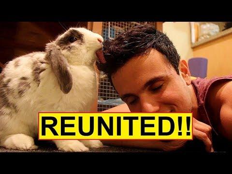 il-coniglio-che-rivede-il-suo-umano-dopo-molto-tempo