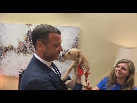ليف شرايبر يتبنى كلبين تشردا جراء إعصار هارفي
