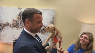 Liev Schreiber Adopts Rescue Puppies from Texas at LIVE