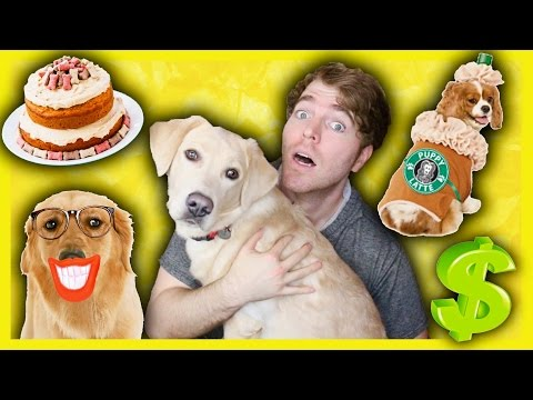 TRYING WEIRD DOG PRODUCTS (видео)