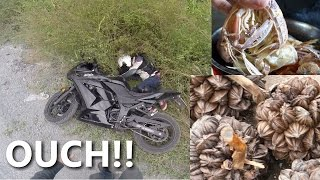 Can Gio Vietnam  city photos gallery : Vietnam Motorcycle Crash, Water Coconuts, and Mantis Shrimps - CAN GIO