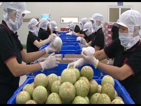 Ngành Công Thương quyết liệt tìm kiếm thị trường, kết nối tiêu thụ nông sản