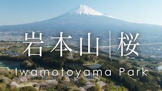 空撮 富士山と桜 岩本山公園  |  Cherry Blossoms at Iwamotoyama Park