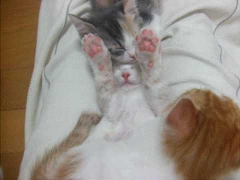 こはる日和.子猫は何匹?