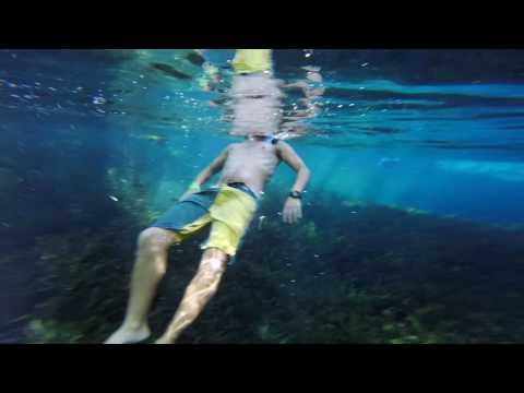 Snorkeling in Ichetucknee Springs 2017