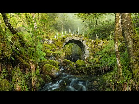 """Peaceful Music, Relaxing Music, Celtic Instrumental Music  """"Celtic Forest"""" by Tim Janis"""