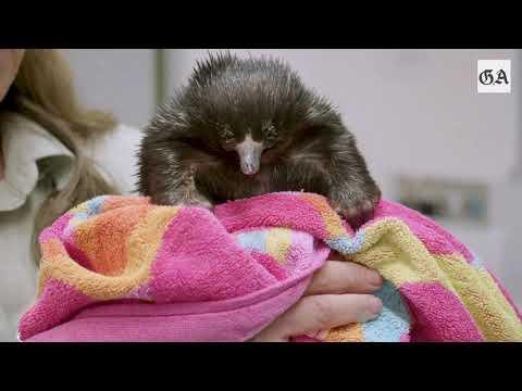 Sydney (Australien): Taronga Zoo päppelt Wildtiere na ...