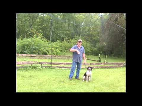 gundog training using The Magical Fly Pen for Spaniel traininggundog training using The Magical Fly Pen for Spaniel training<media:title />