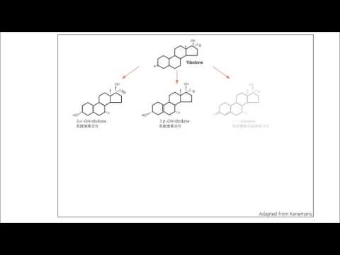 Metabolites and Mechanism of Tibolone