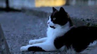 映画『猫が教えてくれたこと』本編映像
